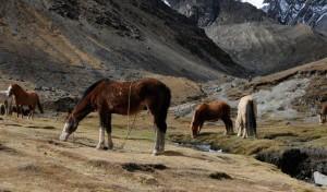 Healer Einar Tyholdt tur til Peru. Hester i fjell.